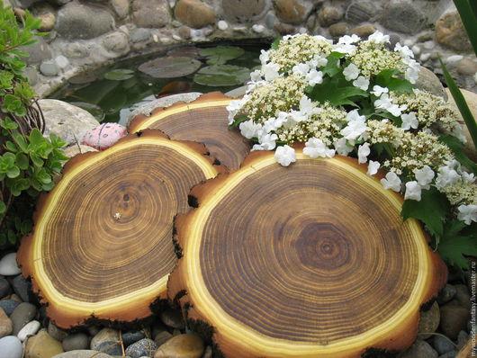 Деревья ручной работы. Ярмарка Мастеров - ручная работа. Купить Спил акации. Handmade. Дерево, спил дерева, срез