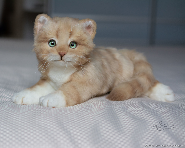 Реалистичный котенок Том, Мягкие игрушки, Ростов-на-Дону,  Фото №1