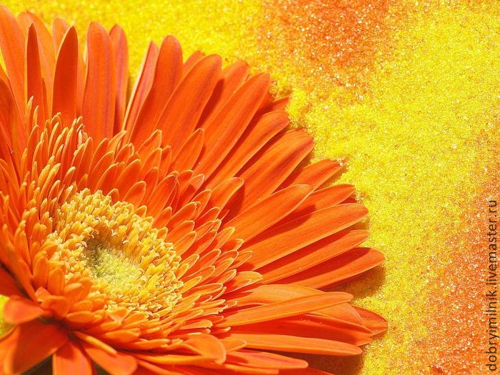 обои оранжевого цвета на рабочий стол № 648189  скачать