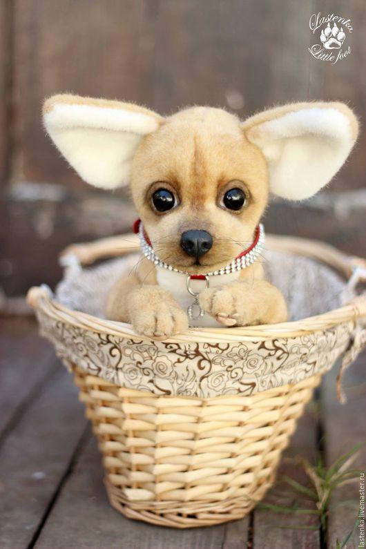 Мишки Тедди ручной работы. Ярмарка Мастеров - ручная работа. Купить чихуахуа Оникс. Handmade. Бежевый, щенок тедди