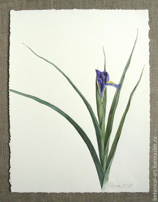 Картины цветов ручной работы. Ярмарка Мастеров - ручная работа. Купить Ирис. Handmade. Синий, картина с цветами, акварельные краски