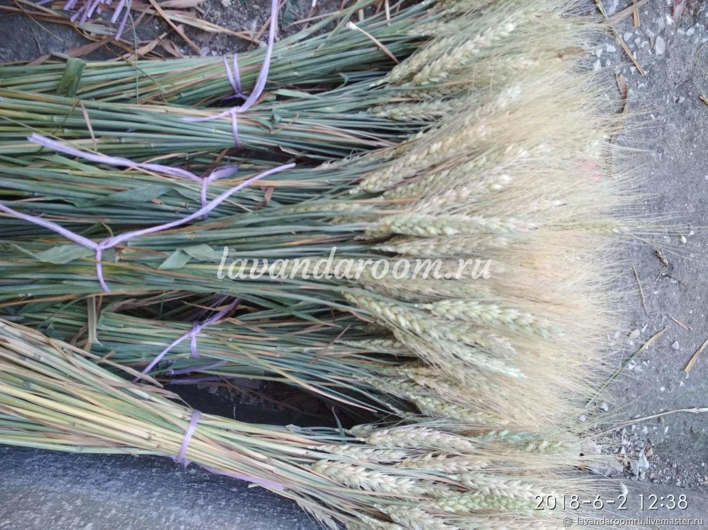 Пшеница пучок цвет натуральный, Букеты, Мытищи,  Фото №1