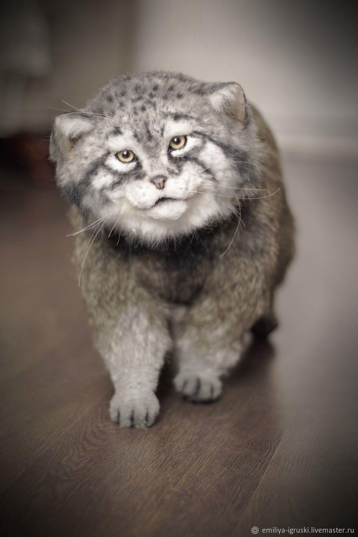 Manul. Wild cat. Realistic toy, Stuffed Toys, Tyumen,  Фото №1