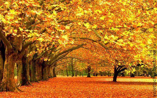 Набор Алмазная вышивка `Осенний лес` (арт.55). Набор можно заказать в любых размерах в технике `Набор для рисования картин` ,`Алмазная живопись` и в технике `Фотокартина`. Цены по запросу.