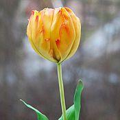 Цветы и флористика ручной работы. Ярмарка Мастеров - ручная работа Тюльпан из полимерной глины. Handmade.