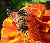 Рина-пчелка - Ярмарка Мастеров - ручная работа, handmade