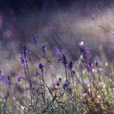 """Картины и панно ручной работы. Ярмарка Мастеров - ручная работа """"Сны горных трав"""" художественная фотография. Handmade."""