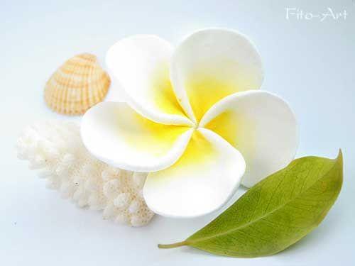 Свадебные украшения ручной работы. Ярмарка Мастеров - ручная работа. Купить Цветок белой плюмерии. Handmade. Заколка с плюмерией, белый