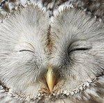White Owl - Ярмарка Мастеров - ручная работа, handmade