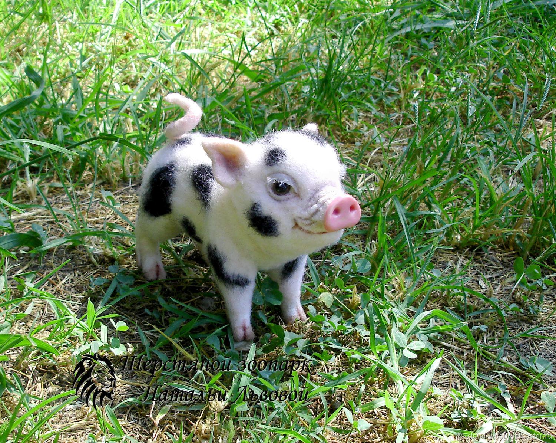 Pig of NAF-NAF – felted wool pig, felted toy (pig), Felted Toy, Sochi,  Фото №1