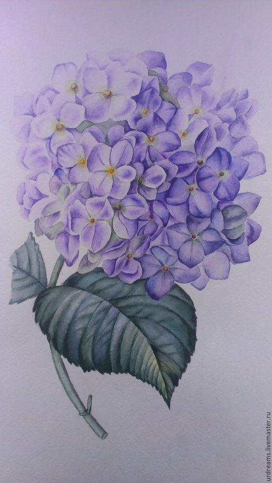 Картины цветов ручной работы. Ярмарка Мастеров - ручная работа. Купить Гортензия. Handmade. Комбинированный, ботанический рисунок, акварельные цветы
