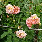 Для дома и интерьера ручной работы. Ярмарка Мастеров - ручная работа Опора-зонт  для штамбовой розы. Handmade.