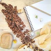 Сухоцветы ручной работы. Ярмарка Мастеров - ручная работа Сухоцвет щавель конский 1 ветка, коричневый. Handmade.