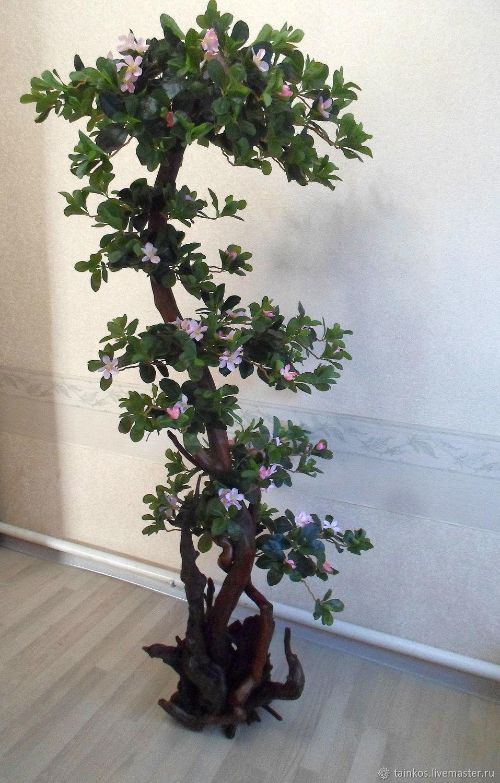 Интерьерное цветущее дерево на коряге , Деревья, Ростов-на-Дону,  Фото №1