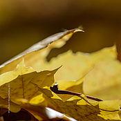 """Картины и панно ручной работы. Ярмарка Мастеров - ручная работа Фотокартина """"Осенних листьев кутерьма"""". Handmade."""