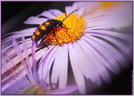 """Фотокартины ручной работы. Ярмарка Мастеров - ручная работа. Купить Фотокартина """"Лето в деталях"""" 3. Handmade. Сиреневый, жук, цветы"""