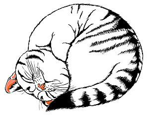Kat.Kom