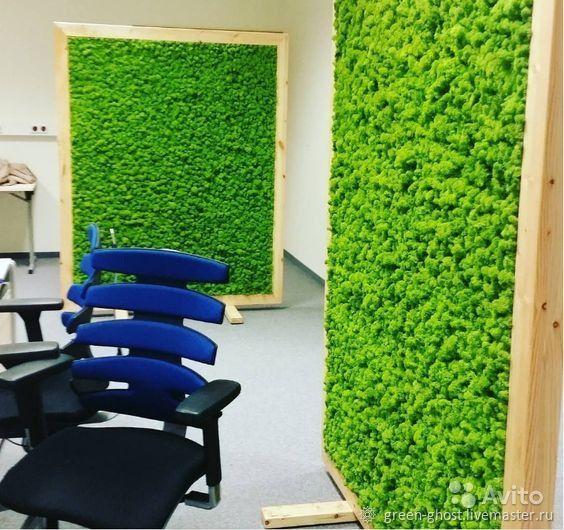 Стабилизированный мох, Растения, Москва, Фото №1