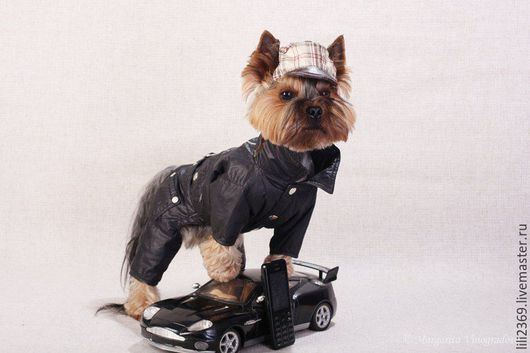 """Одежда для собак, ручной работы. Ярмарка Мастеров - ручная работа. Купить Комбинезон """"Косуха"""". Handmade. Одежда, той-терьер, джинса"""
