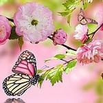 """""""САКУРА"""" - материалы для цветоделия - Ярмарка Мастеров - ручная работа, handmade"""