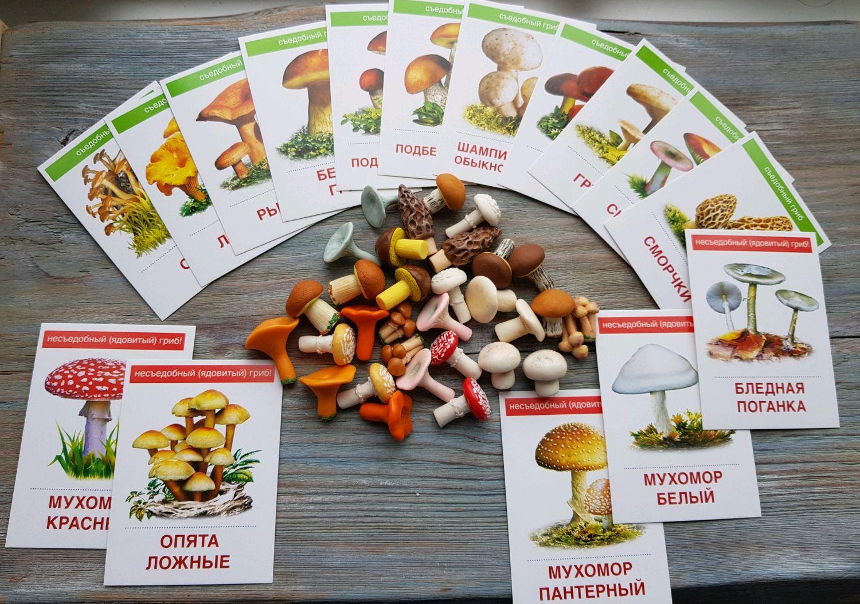 Набор грибов с карточками, Миниатюрные игрушки, Москва, Фото №1