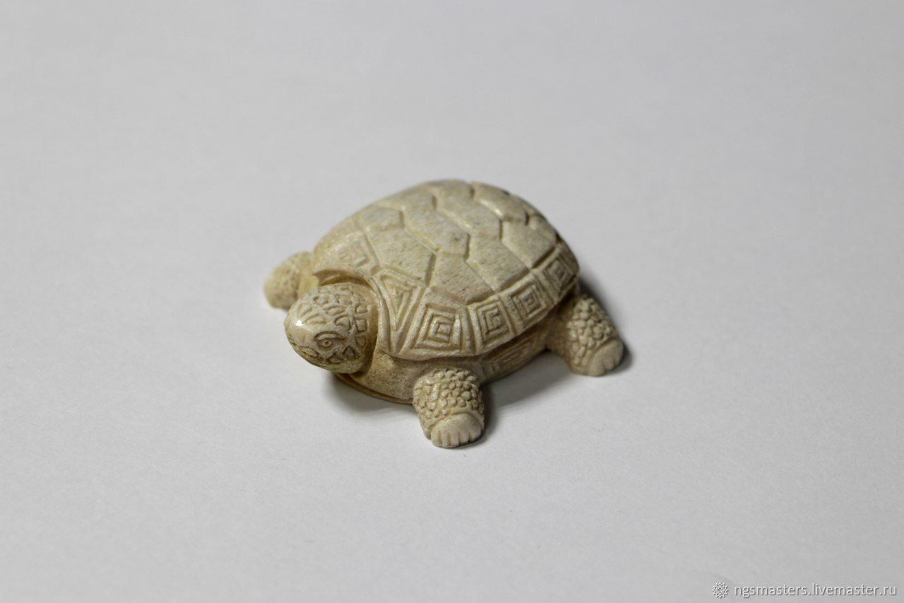 Turtle bone
