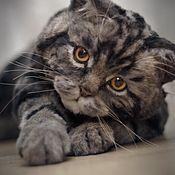 Мягкие игрушки ручной работы. Ярмарка Мастеров - ручная работа Британская мраморная  кошка в стиле тедди натюр. Handmade.