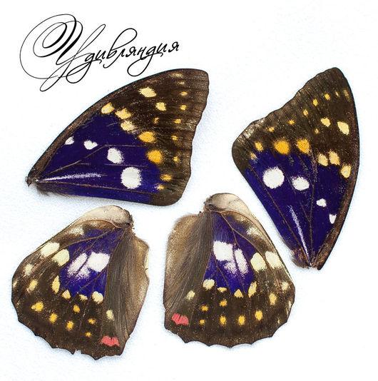 Другие виды рукоделия ручной работы. Ярмарка Мастеров - ручная работа. Купить Крыло бабочки натуральное №10.. Handmade. Белый