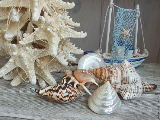 Другие виды рукоделия ручной работы. Ярмарка Мастеров - ручная работа. Купить Море, море.... Handmade. Бежевый, ракушки