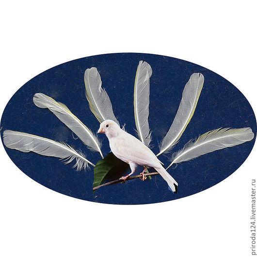 """Другие виды рукоделия ручной работы. Ярмарка Мастеров - ручная работа. Купить Перья птицы """"Канарейка"""". Handmade. Белый"""