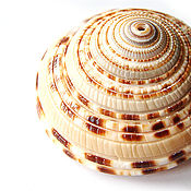 Материалы для творчества handmade. Livemaster - original item The pendant shell is a Promising Architecture. Handmade.
