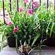 Цветы ручной работы. Ярмарка Мастеров - ручная работа. Купить Орхидея. Handmade. Цветы ручной работы, холодный фарфор