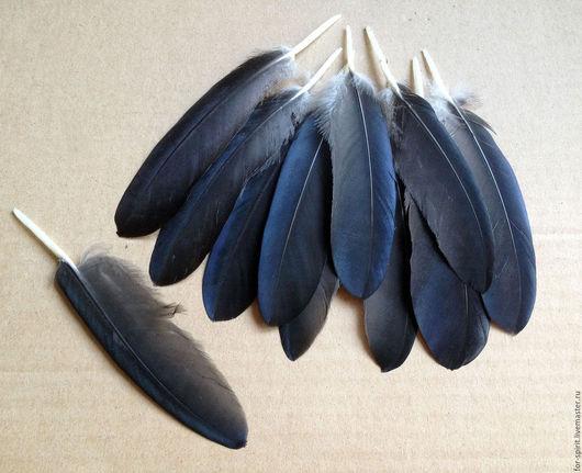 Другие виды рукоделия ручной работы. Ярмарка Мастеров - ручная работа. Купить Перья черного ворона. Handmade. Перья ворона