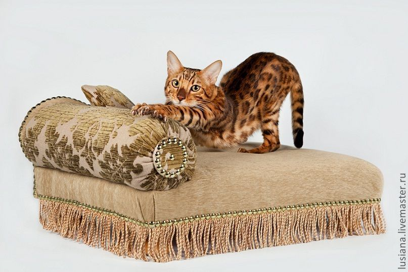 Sofa for a small dog, cat 'Laura' order, Accessories for Pets, Ekaterinburg,  Фото №1
