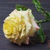 Цветы ручной работы. Ярмарка Мастеров - ручная работа Роза из холодного фарфора. Handmade.