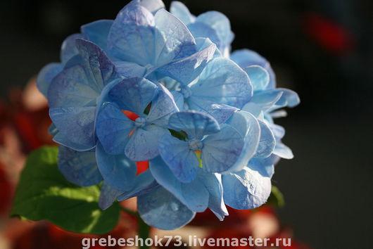 Цветы ручной работы. Ярмарка Мастеров - ручная работа. Купить Голубая гортензия. Handmade. Гортензия, голубой, холодный фарфор