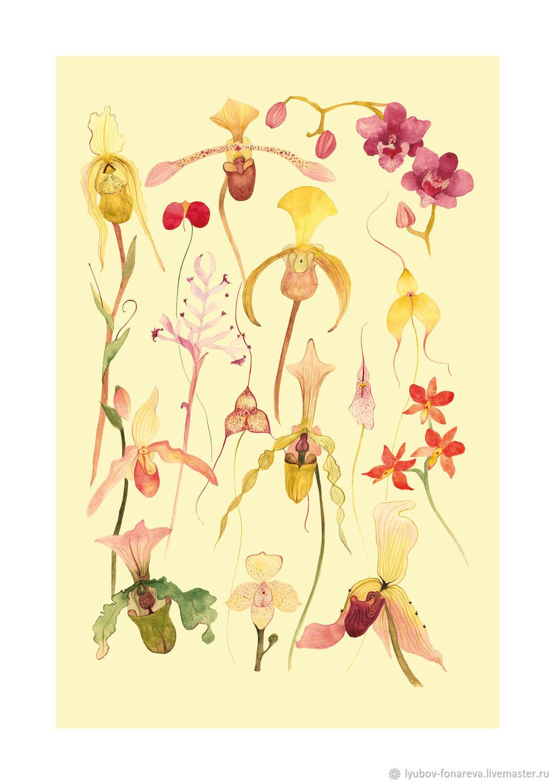 Ботаническая иллюстрация-плакат ОРХИДЕИ (3), А3, Иллюстрации, Москва,  Фото №1
