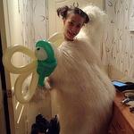 Anna Sokolova (buketizkonfet38) - Ярмарка Мастеров - ручная работа, handmade