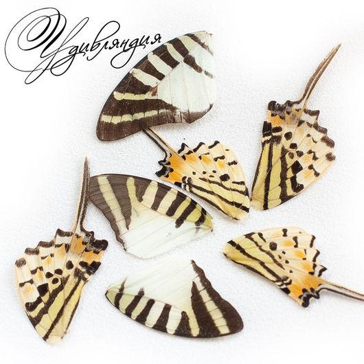 Другие виды рукоделия ручной работы. Ярмарка Мастеров - ручная работа. Купить Крыло бабочки натуральное №3.. Handmade. Белый