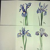 """Картины и панно ручной работы. Ярмарка Мастеров - ручная работа набор открыток """"Ирисы"""". Handmade."""