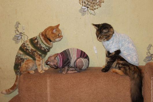 Одежда для кошек, ручной работы. Ярмарка Мастеров - ручная работа. Купить Одежда для собаки или кошки. Handmade. Комбинированный, для мопса