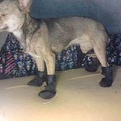Для домашних животных, ручной работы. Ярмарка Мастеров - ручная работа одежка на ножки. Handmade.
