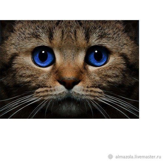 """Картина Алмазная живопись """"Синеглазый кот"""""""