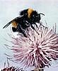bumblebee - Ярмарка Мастеров - ручная работа, handmade